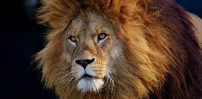 ライオン型睡眠タイプ