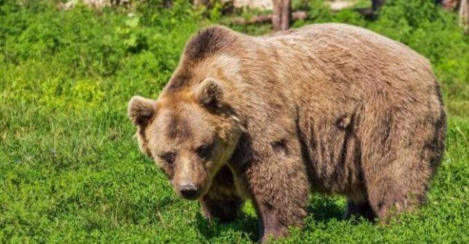 クマ型睡眠タイプ