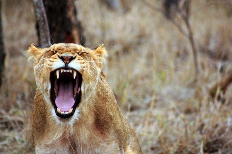 【アンガーマネジメント診断】あなたの「怒りのタイプ」を知り、傾向と対策が分かるWeb診断テスト!